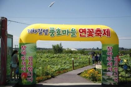풍호마을연꽃축제,강원도 강릉시,지역축제,축제정보